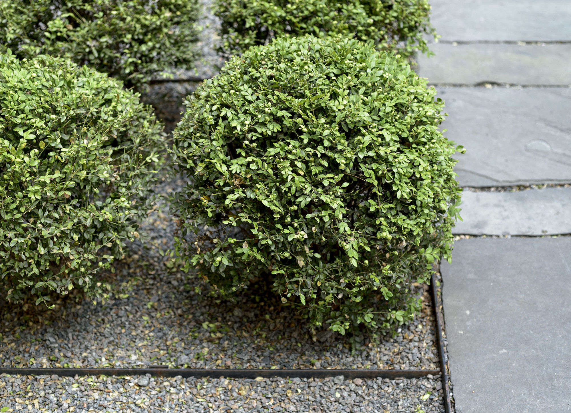 10 Things Your Landscape Designer Wishes You Knew About Gravel But Is Too Polite To Tell You Gardenista