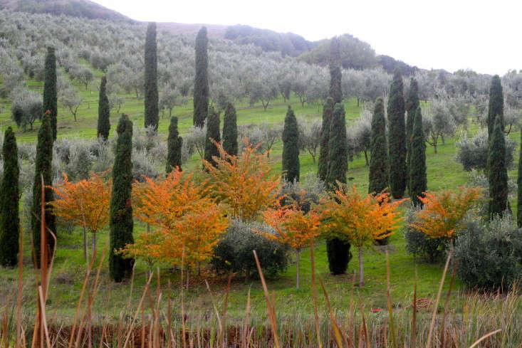 mcevoy-ranch-in-petaluma-olive-mill-winery-gardenista