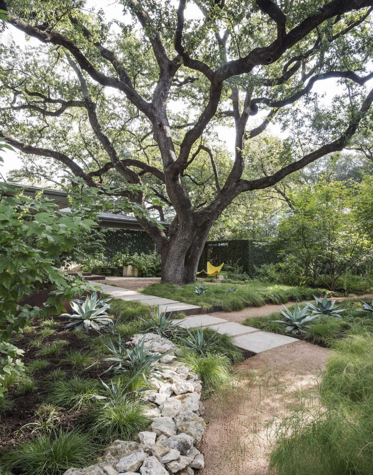 Landscape architect Christine Ten Eyck has a judiciously pruned specimen tree in her front yard in Austin, Texas; her roof is safe from falling branches. Photograph by Matthew Williams for Gardenista.