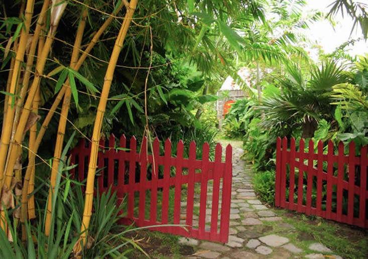 golden-rock-nevis-gardens-gardenista