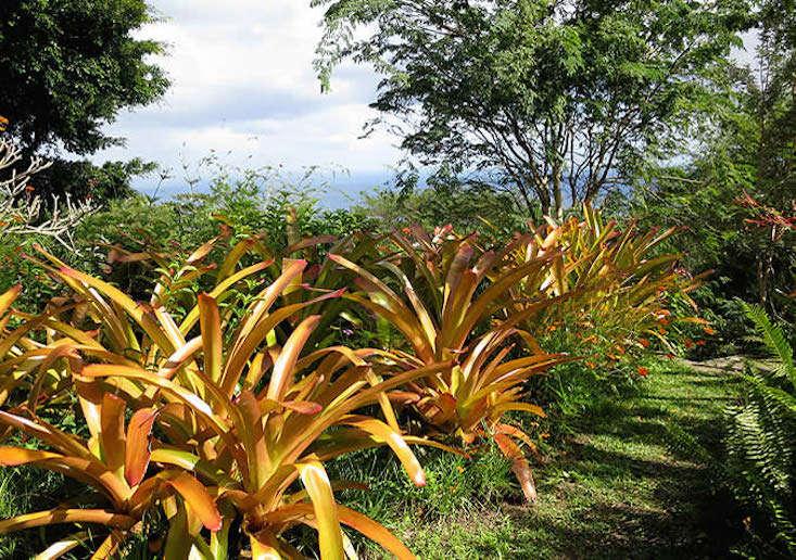 nevis-e-meandering-garden-paths-gardenista