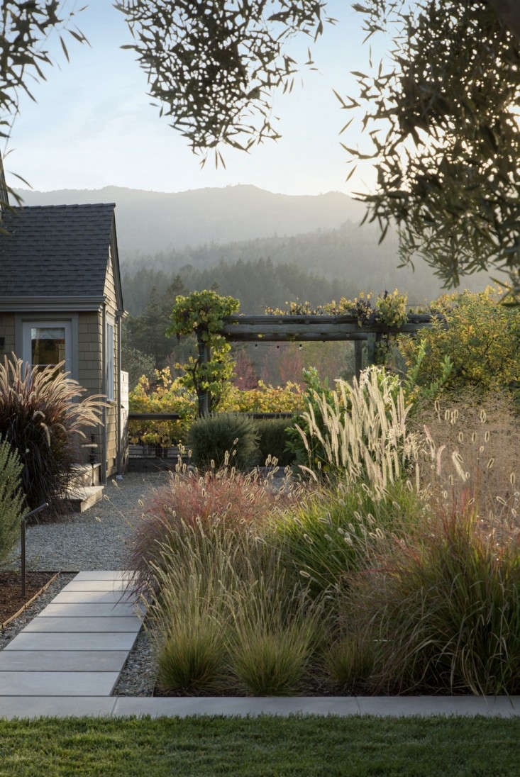Landscape architect Scott Lewis incorporated lyme grass in a palette of mixed ornamental grasses. See more in Vineyard Haven: A Napa Valley Garden That Belongs to the Land.