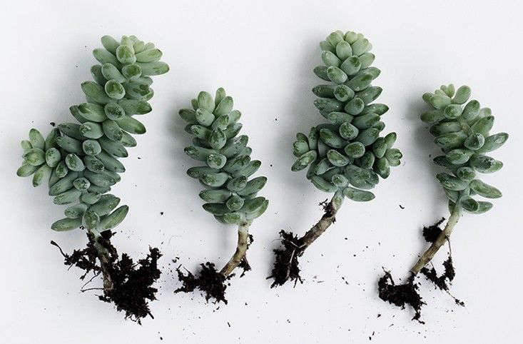 Above Propagate by cuttings. See more atThe New Sharing Economy, Plant Swap Edition.
