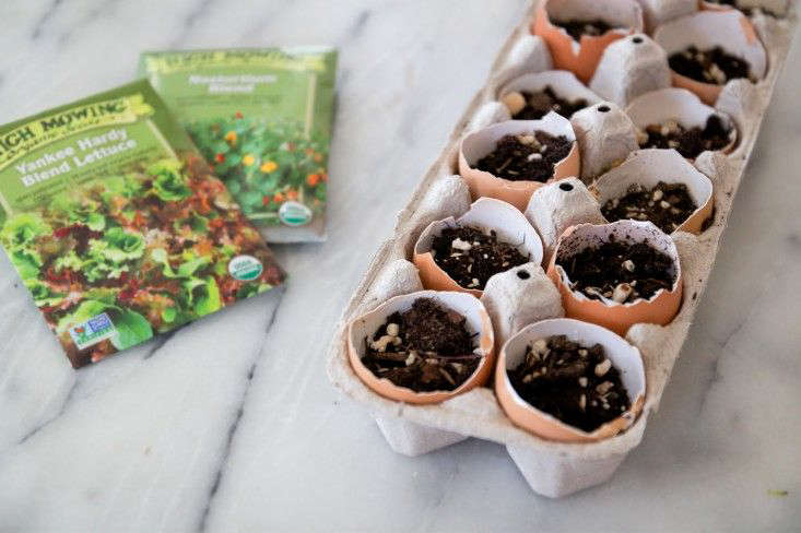 Because they are biodegradable, eggshells make excellent, no-waste seed starters. For this, reserve some of your deeper shell halves. Sterilize the shelves by boiling them or by placing them in a 0°F oven for 30 minutes. (If you put them in a cooling oven after, say, you baked a roast chicken, you can sterilize eggs without using excess energy.)