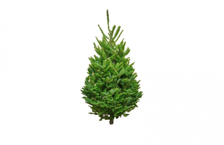 A fresh-cutFraser Fir Tabletop Tree measuring from 3 to 4 feet high comes with a red plastic stand and is \$79 from Five Star Christmas Tree company.