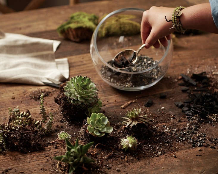 Photograph by John Merkl for Gardenista. For more, see Gardening \10\1: How to Plant an Open Terrarium.