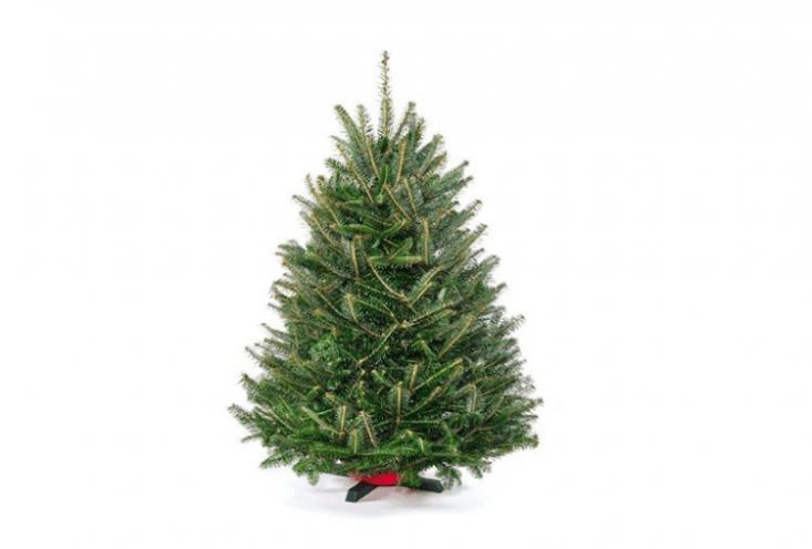 A 3-foot-high fresh-cut Tabletop Fraser Fir farmed on the Blue Ridge Mountains has soft needles and comes with a tree stand. It is \$69.99 (and ships free) from Blue Ridge Christmas Trees via Amazon.