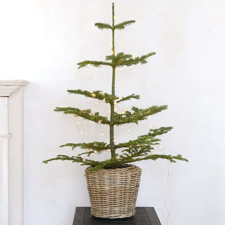 A fresh-cutTabletop Noble Fir with blue-green needles measures from 3 to 4 feet high and comes with an iron bucket for display; it is \$88 from Terrain.