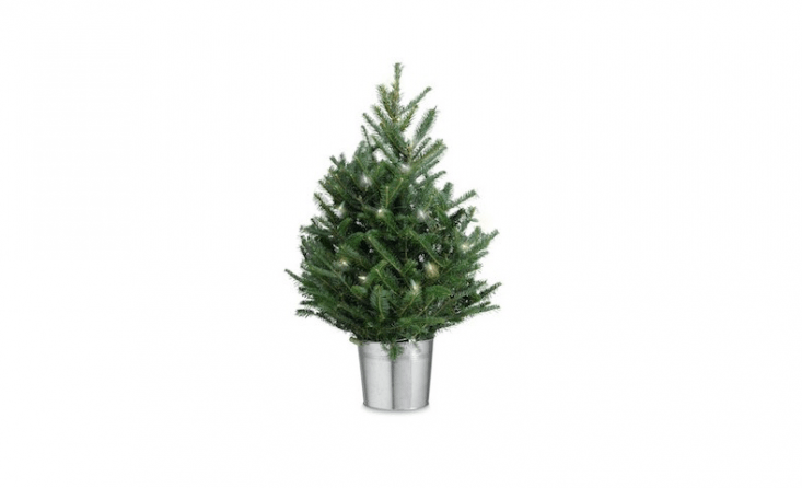A 6-year-old Tabletop Fraser Fir Tree comes with one string of white lights; \$69.95 from Williams-Sonoma.