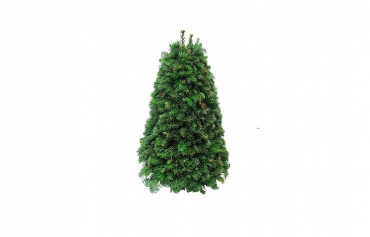 A Table Top Fraser Fir tree is \18 inches high and is \$7\1.95 from Gardens of the Blue Ridge.
