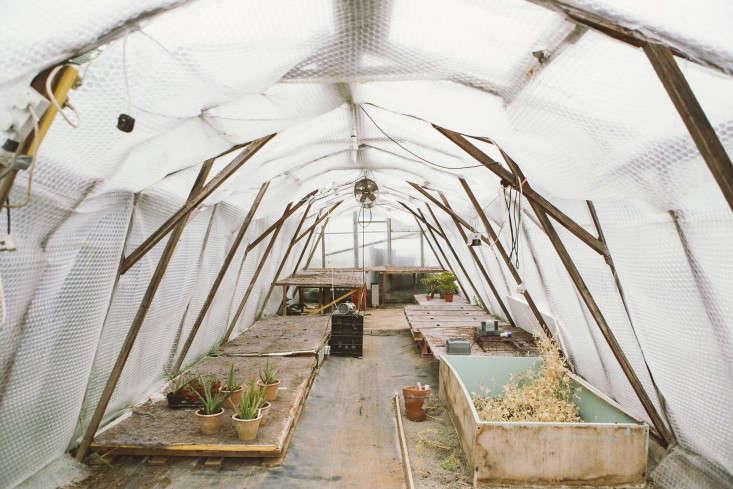vervain-growhouse-india-hurst-gardenista