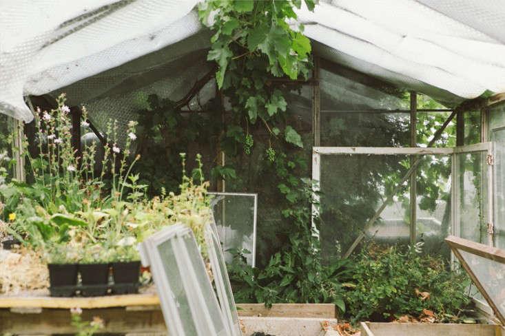 vervain-nursery-cold-frames-gardenista