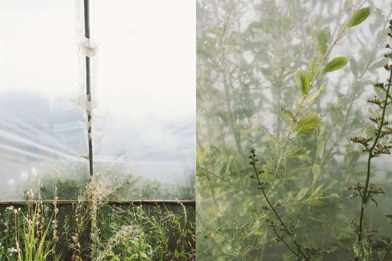 vervain-nursery-detail-shot-garenista