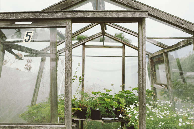 vervain-nursery-greenhouse-plants-gardenista
