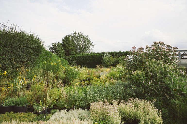 vervain-nursery-india-hurst-gardenista