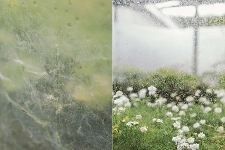 vervain-nursery-raindrops-detail-gardenista