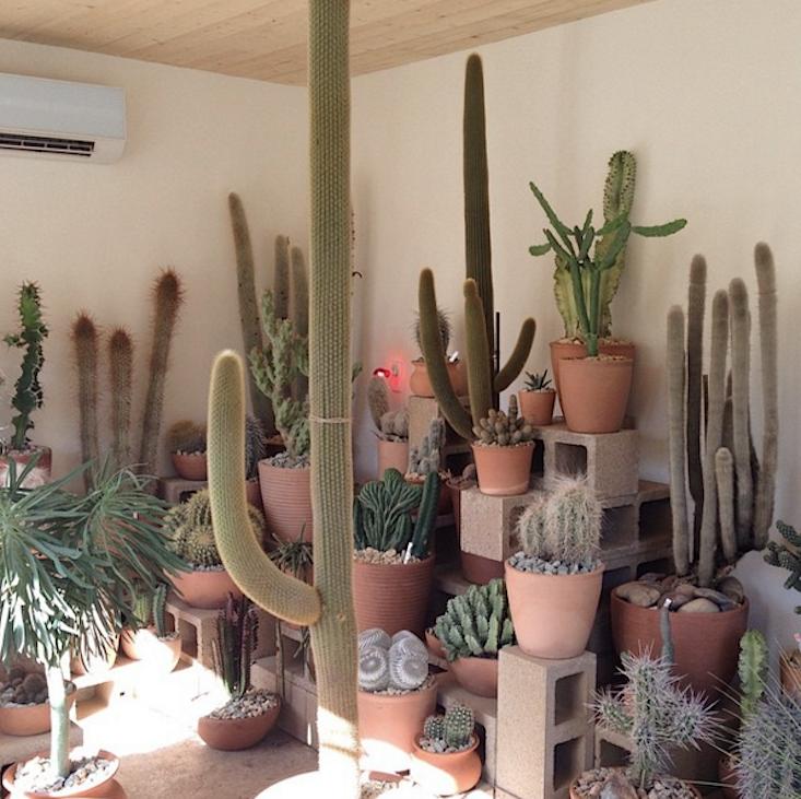 Cactus-Store-LA-02-Gardenista