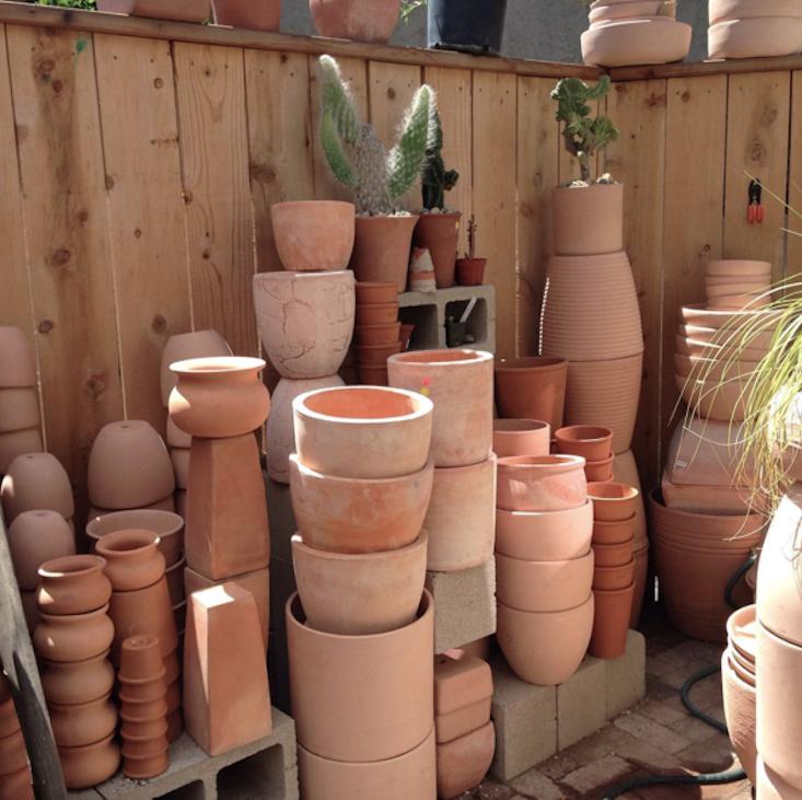 Cactus-Store-LA-03-Gardenista