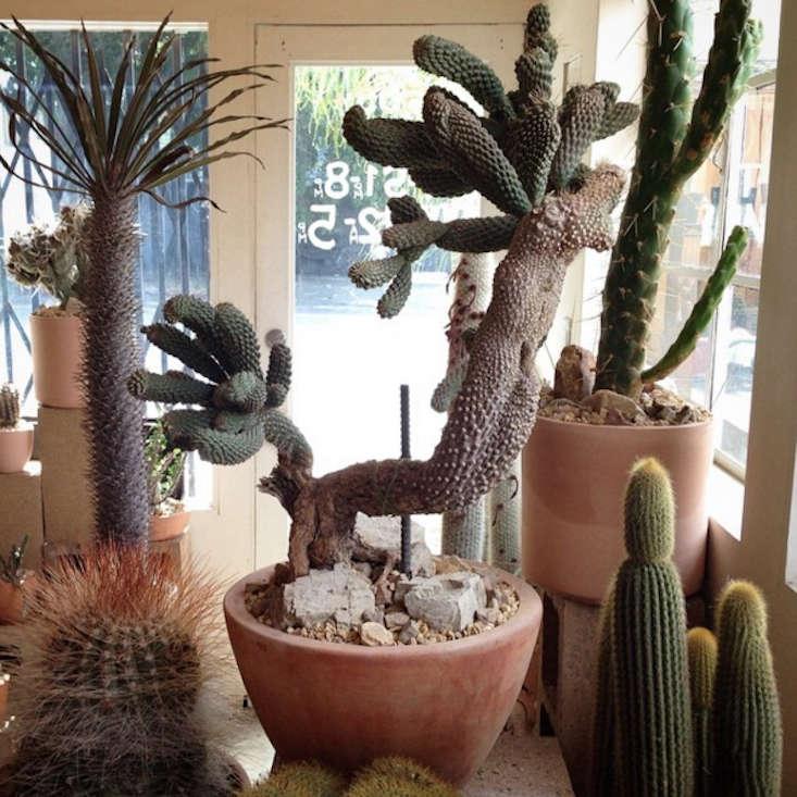 Cactus-Store-LA-05-Gardenista