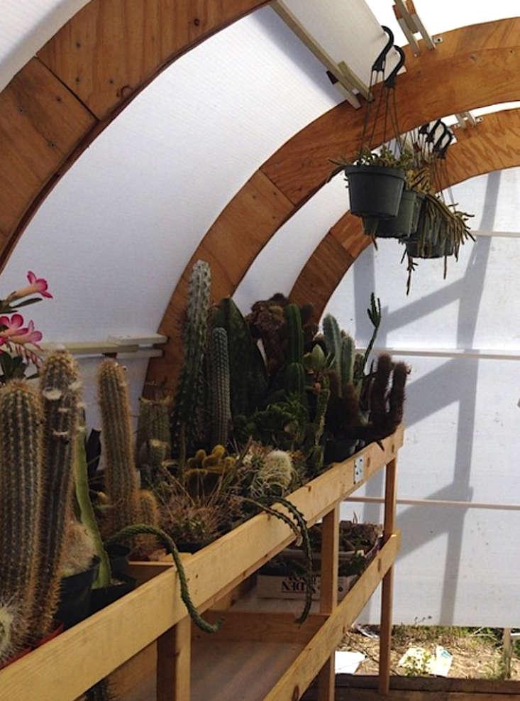 Cactus-Store-LA-06-Gardenista
