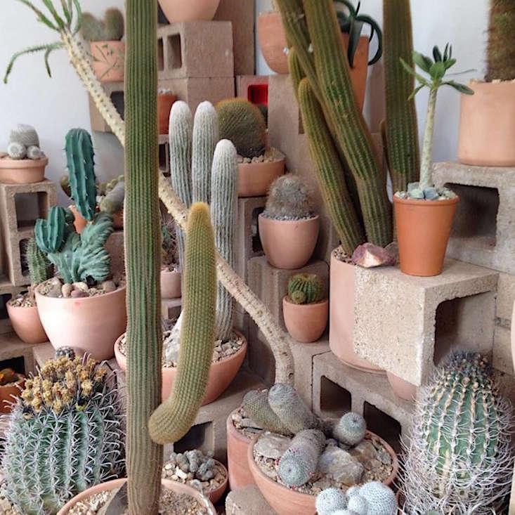 Cactus-Store-LA-08-Gardenista
