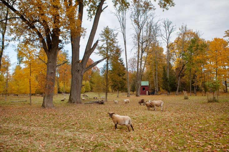 Freunde-von-Freunden-Aigars-Bikse-autumn-goats-gardenista