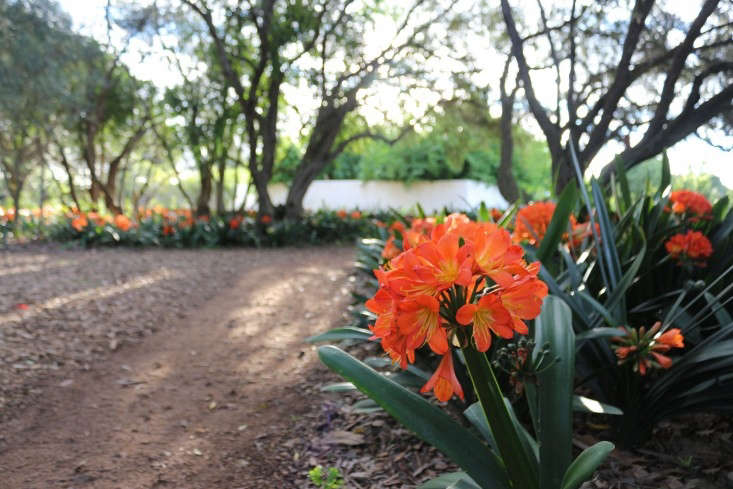 Photograph by Marie Viljoen, from 8 South African Flowers for American Gardens.