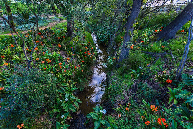 Springtime Clivias growing along a stream on a farm near Cape Town. Photograph by Vincent Mounier, from Garden Visit: Behind the Scenes at Babylonstoren.
