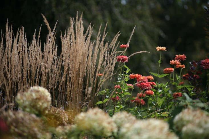 grasses-white-flower-farm-gardenista