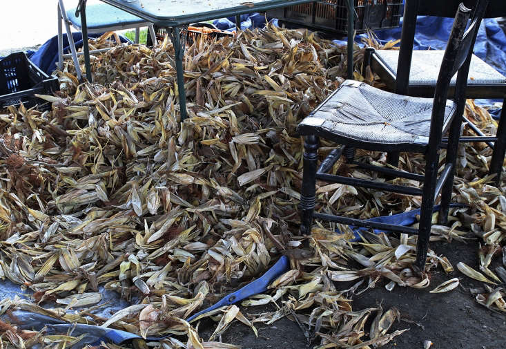 high mowing seeds corn husks