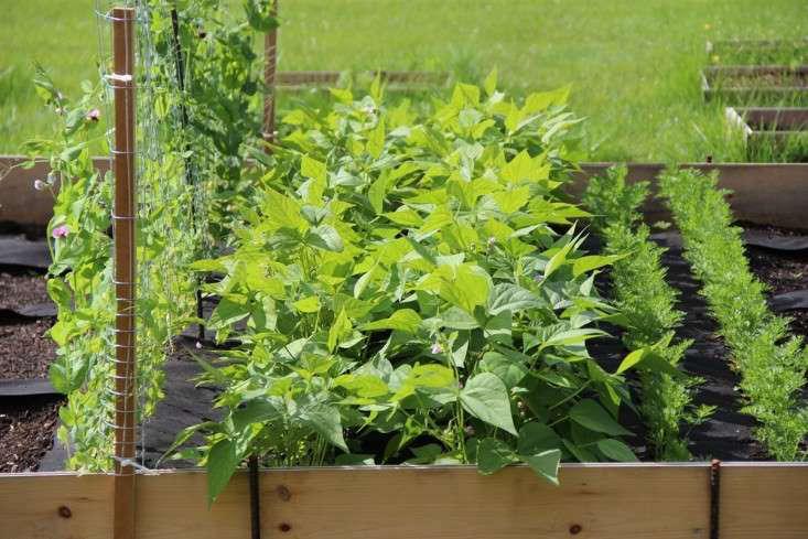 instant-edible-garden-gardenista