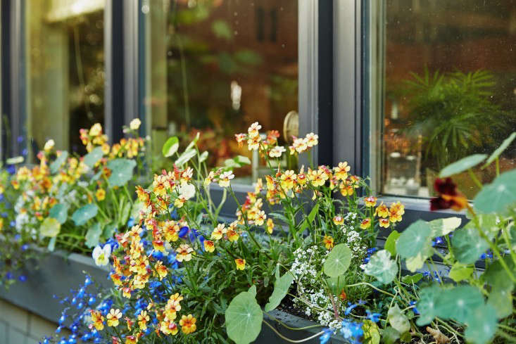 A window box planted with lobelias and nasturtiums is mounted outside Linda&#8