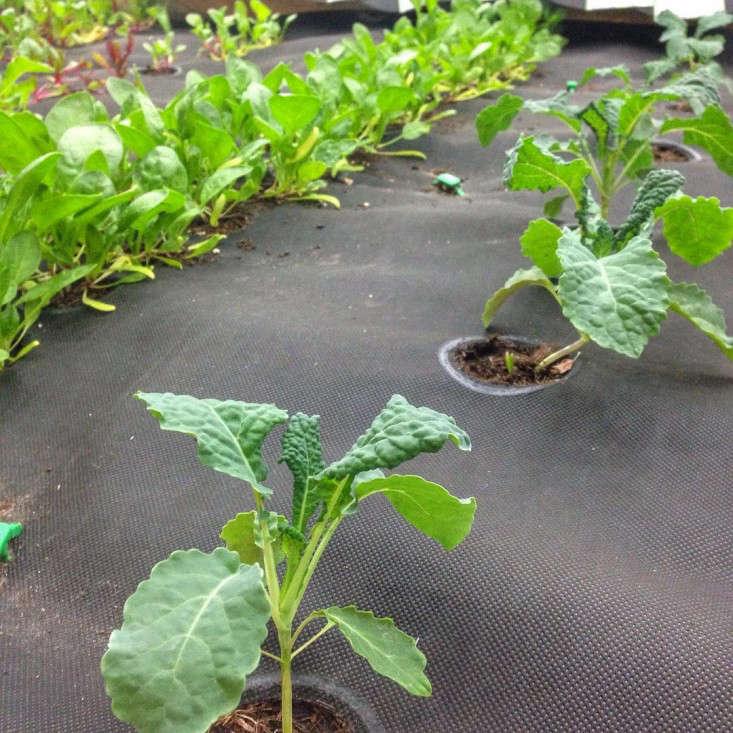 seedsheet-germination-gardenista