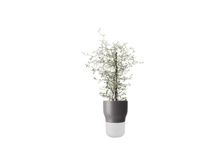 An Eva Solo Self Watering Plant Pot in gray is $65 from John Lewis.