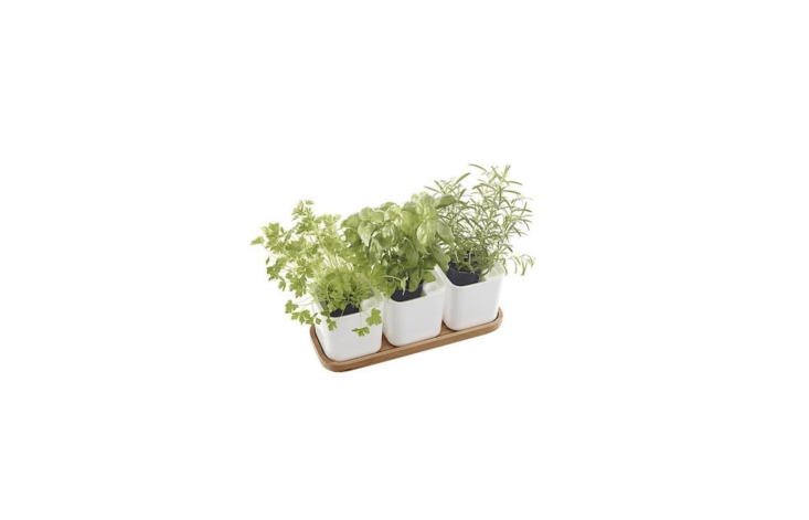 From Orthex, a trio of self-watering pots have hydro-felt mats to maintain moisture for roots. A measuring stick alerts you to add more water as necessary. A four-pieceSelf Watering Herb Pot Set comes with a tray plus three pots; $.99 from Clas Ohlson.