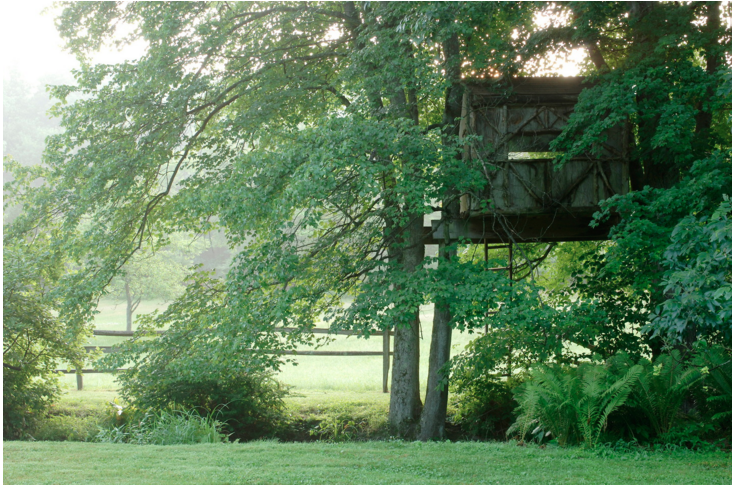 suburban-garden-treehouse-gardenista