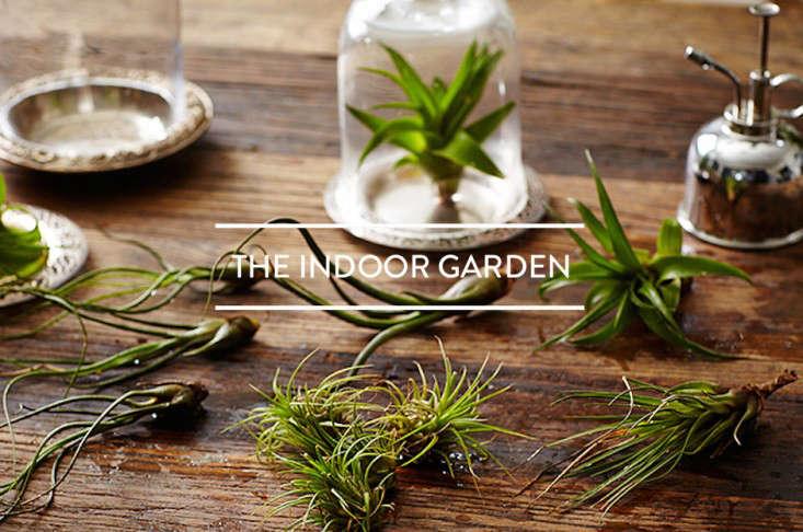 toc-the-indoor-garden-gardenista