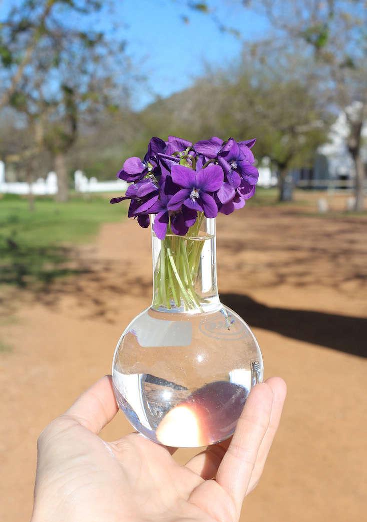 violets_marie viljoen-babylonstoren-gardenista