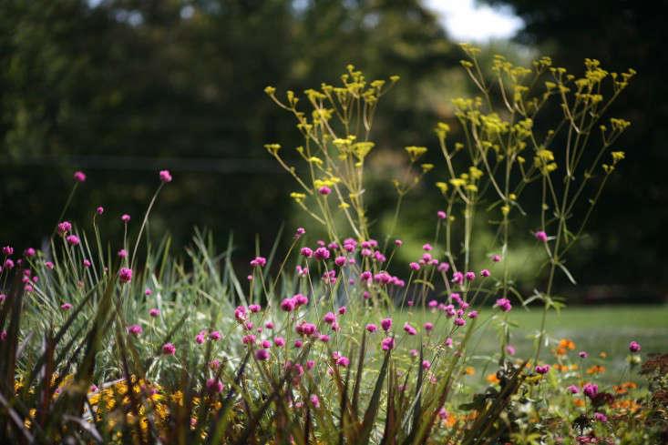 white-flower-farm-purple-orange-yellow-gardenista