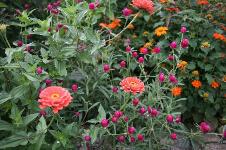 white-flower-farm-reds-and-pinks-gardenista