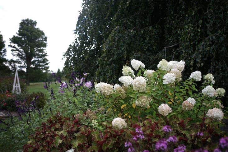 white-flower-farm-white-hydrangeas-gardenista