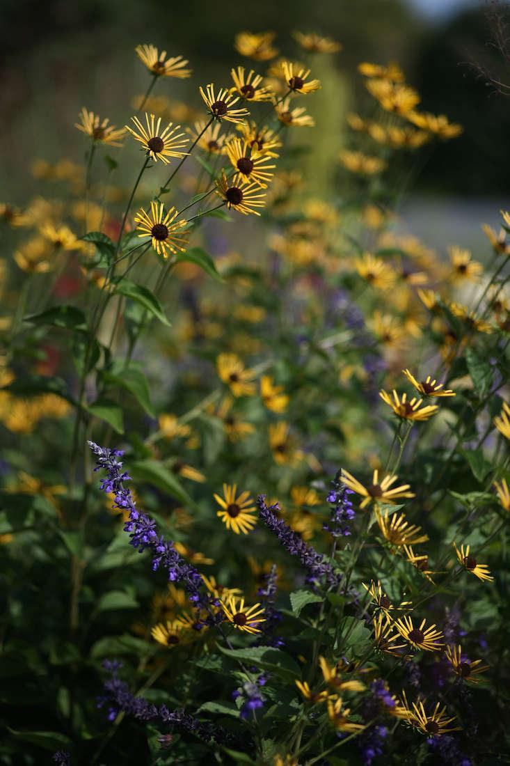 white-flower-farm-yellow-flowers-gardenista
