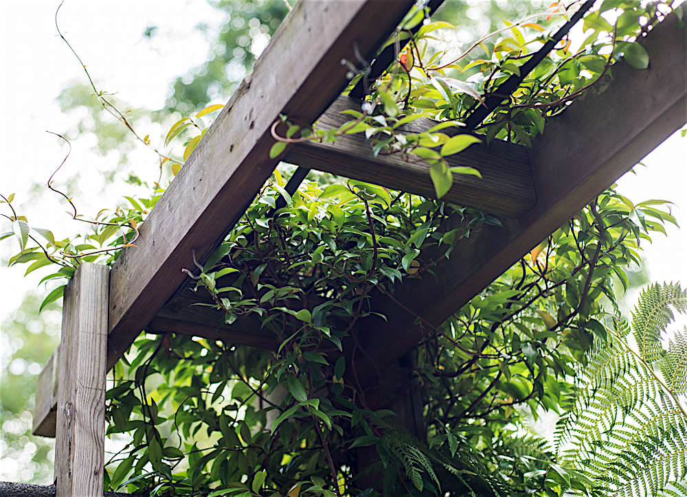 I always look forward to summer and the sweet scent of the jasmine that grows on the trellis.