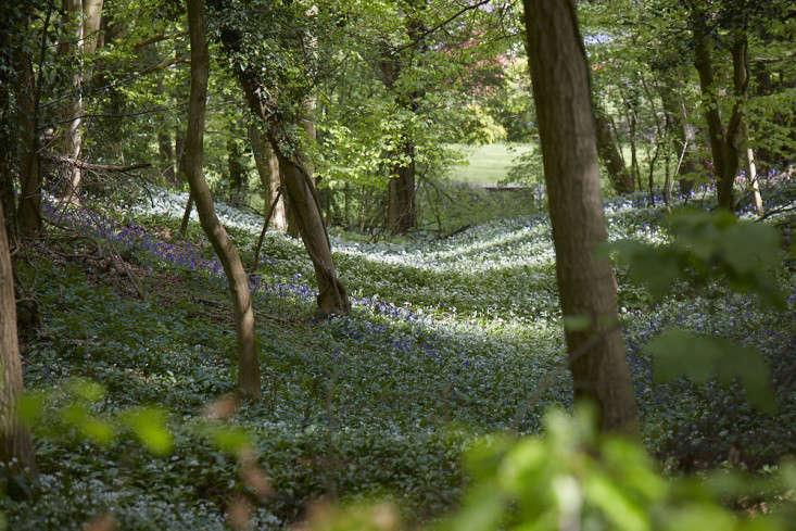 bluebells-garlic-britt-willoughby-dyer-gardenista-7