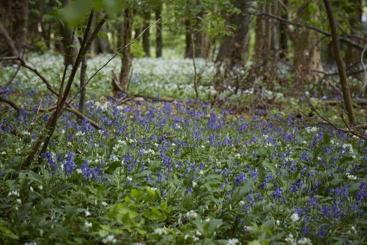 bluebells-garlic-standish-wood-britt-willoughby-dyer-gardenista-2