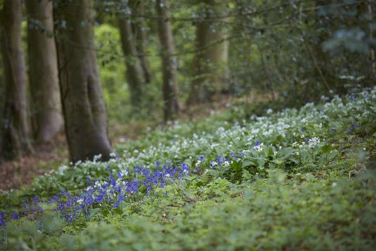 bluebells-garlic-standish-wood-britt-willoughby-dyer-gardenista