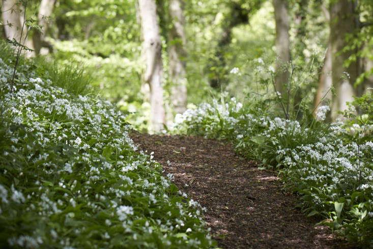 bluebells-wild-garlic-britt=willoughby-dyer-gardenista-5