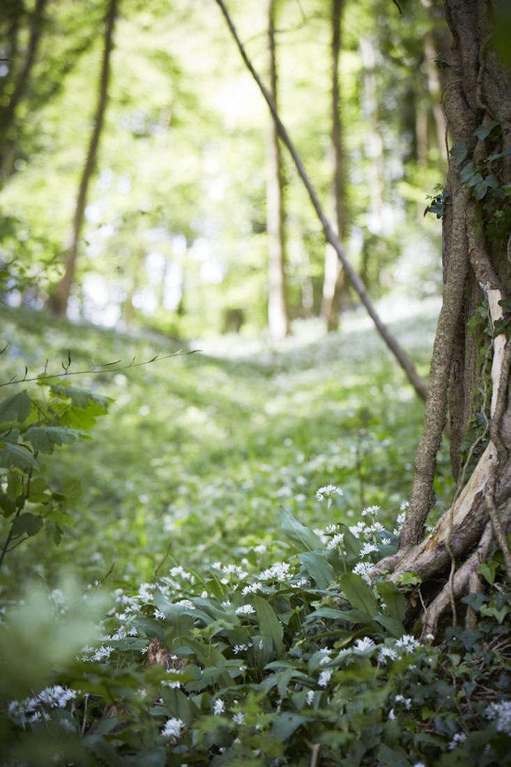 bluebells-wild-garlic-standish-woods-britt-willoughby-dyer-gardenista (1)