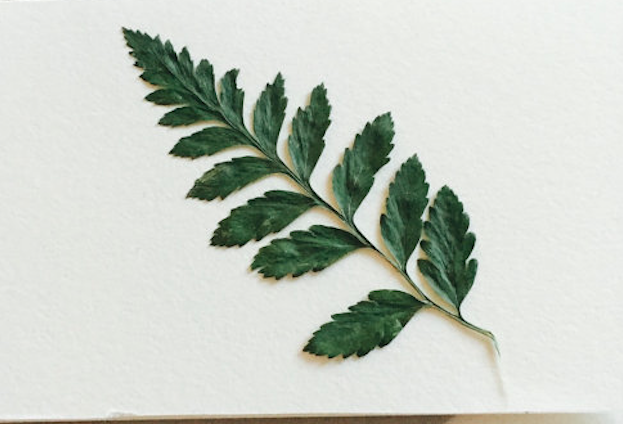 botanical-notecard-etsy-gardenista