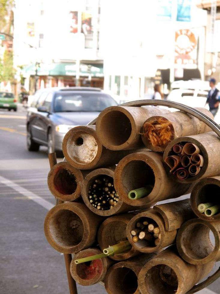bug-house-sf-street-gardenista